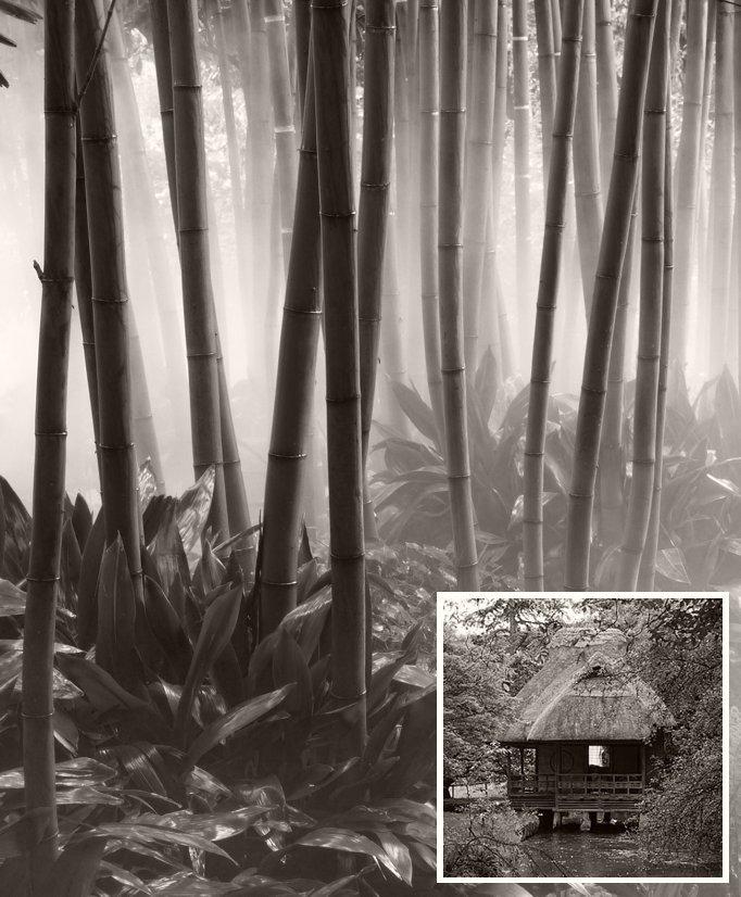 Bambusgehölz-